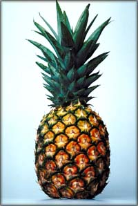 GERD diet: picture of whole pineapple.